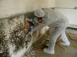 Best Mold Inspection NJ