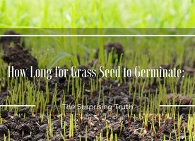 How Long for Grass Seed to Germinate?