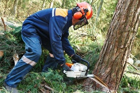 10 Tree Cutting Techniques