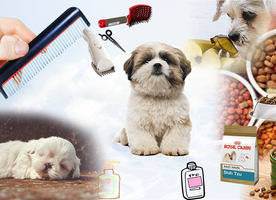 What are the Best Clippers For Shih Tzu dogs