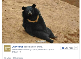 "Man Raises ""Puppies"" for Two Years and Then Realizes They Are Bears. Ummmmm......."