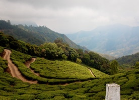 Plan a Safe and Interesting Trip to Munnar as Single Women Traveler
