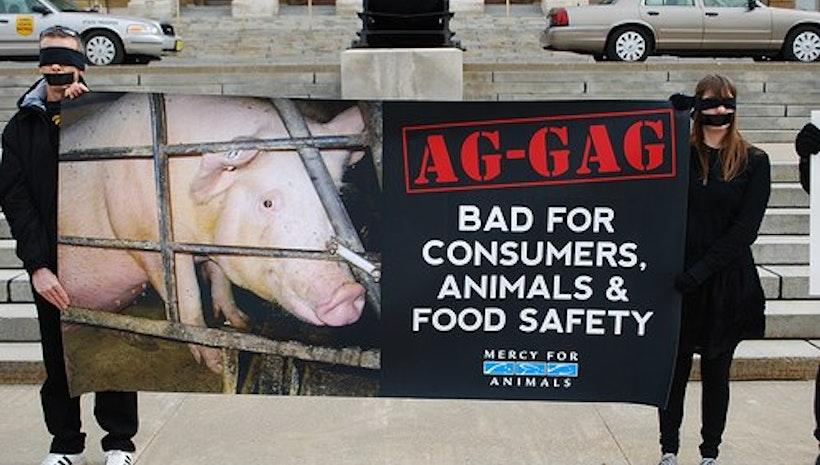 Ag-Gag Bills: Unconstitutional?