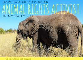 How I Am Able To Be An Animal Rights Activist In My Daily Life