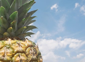 Pineapple on Pizza (and other important conversations)