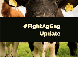 Ag-Gag Follow-Up: Take Action!