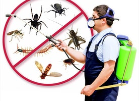 Why Do I Need Pest Control For My House?