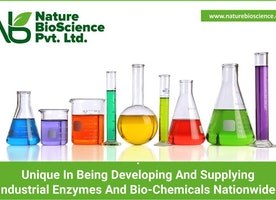 How Safe Are Industrial Enzymes?