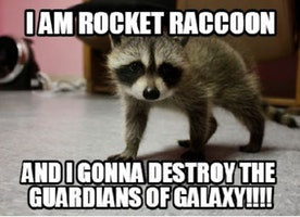 Best Ways to Get Rid of Raccoon Poop