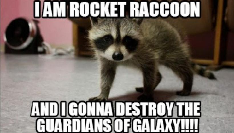 Best Ways to Get Rid of Raccoon Poop