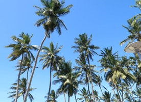 Explore Mombasa