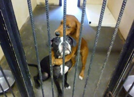Shelter Dog Hugs Her Friend Hours Before Euthanasia And Save Their Lives!