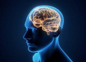 http://maleenhancementshop.info/max-brain-fuel/