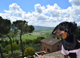 Talula visting the Val d' Orcia
