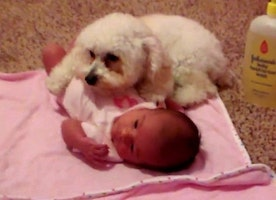 This Adorable Poodle Will Protect Her Baby Sister From an Evil Blow Dryer No Matter What