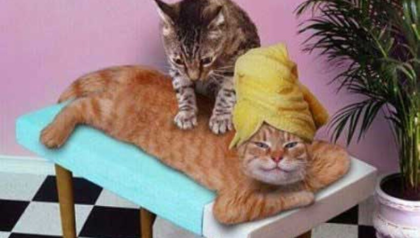 These Cats Giving Massages Will Melt Even a Dog Person's Heart