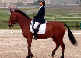 3 Common Mistakes in Horse-riding and How You Can Fix Them