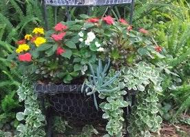 Choosing Home Garden Plants for Philadelphia
