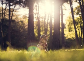 Five tips for looking after your older dog