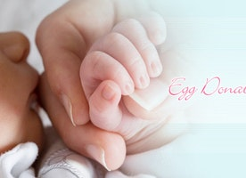 Are You Looking For an Egg Donor Database?