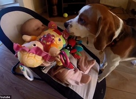Heartwarming Reaction From Guilty Dog Who Apologizes Baby For Stealing Her Toy!