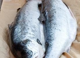 The Health Benefits of Alaskan Salmon