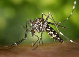 Mosquitoes Bite Into Marriages