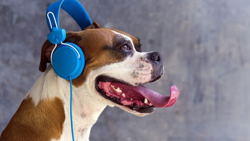 Calm Your Dog with the Help of Music: Most Popular Songs