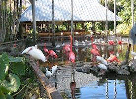 5 Reasons to Love Flamingo Gardens