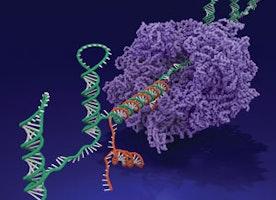 Biocomputers