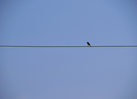You And Your Tightrope