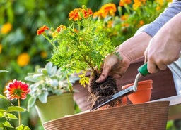 How to Keep Your Garden In Tip Top Shape All Summer Long