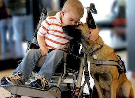 Saving Lives, One Amazing Service Dog at aTime