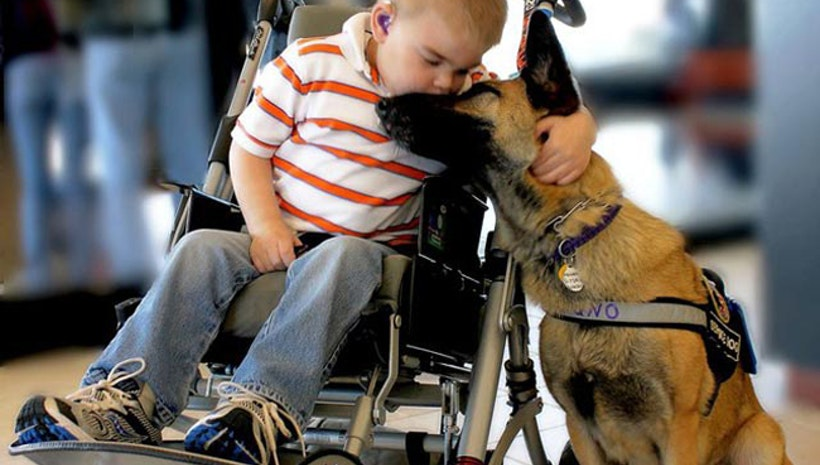 Saving Lives One Amazing Service Dog At A Time