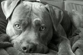 Love dogs! & Christmas! woo
