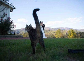 Cats Who Are Better at Photobombing Than You! Hilarious!