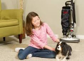 How to get rid of pet hair faster and keep your home dust free?
