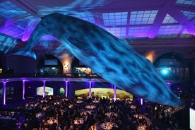 NYU LANGONE'S 2017 MUSCULOSKELETAL BALL RAISES MORE THAN $1.3 MILLION TO ADVANCE MEDICINE, EDUCATION & RESEARCH IN ORTHOPEDICS, RHEUMATOLOGY & REHABILITATION