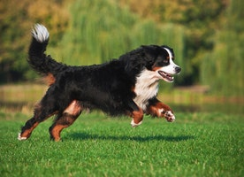 Dog Training tips for indoors - Best Practices