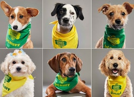 Meet ALL The Furtastic 2018 PUPPYBOWL Competitors. Who's your pick for MVP?