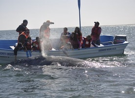 Tips for Successful Whale Watching in Baja