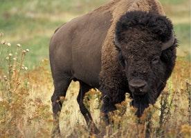 4  Seasons of Yellowstone National Park
