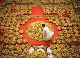 Mango Trade between Pakistan & America