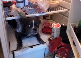 These 32 Guilty Pets Didn't Expect You To Be Home So Soon. Will Make You Smile !!!