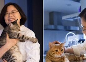 Cat Woman: Taiwan's first female president huge fan of felines