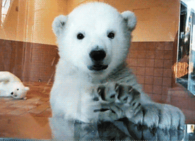 The 11 Cuddliest Bear GIFs Ever