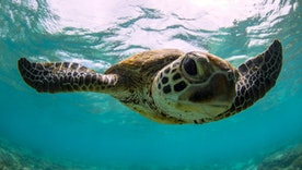 Amazing facts about aquatic animals