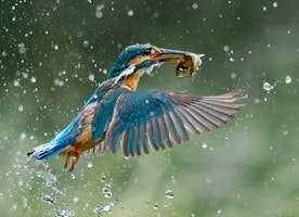 10 Stunning Photographs Taken by Winners of the 2014 B&H Wilderness Photo Competition