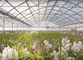 Westerlay Orchids Invests in Irrigation to Increase Sustainability