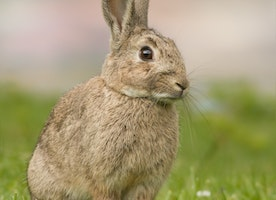 Global Petition Against Animal Testing by BodyShop